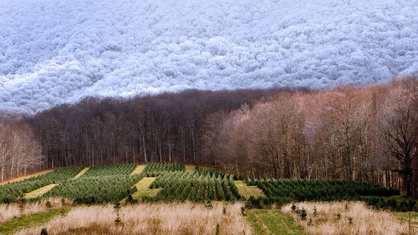 A Christmas tree farm in Zionville, North Carolina wallpaper by ...