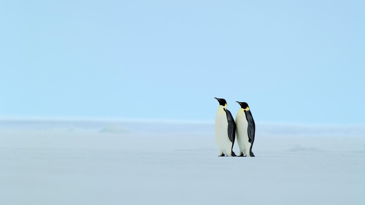 A Couple Penguins In The Beach