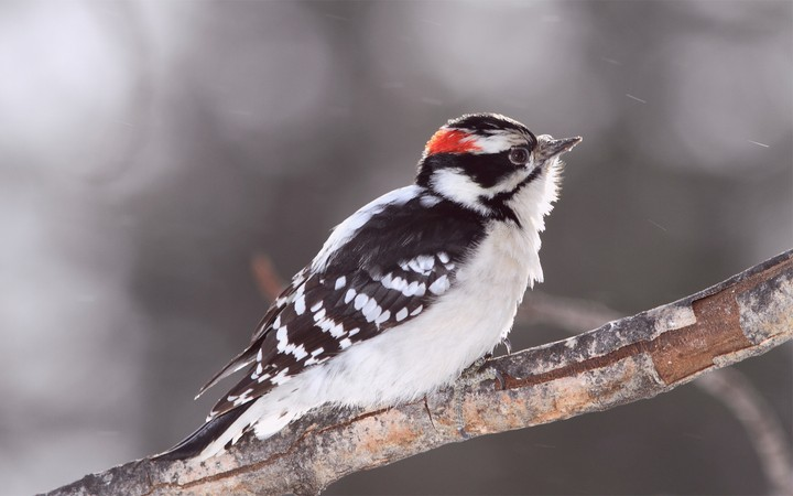 a-woodpecker-on-a-tree-branch