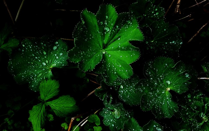 Amazing Green Flower After Rain