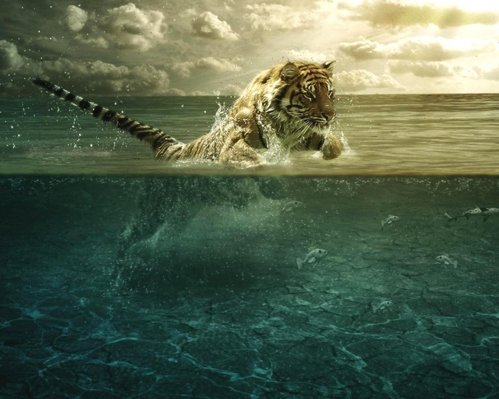 Animals Clouds Fish Leap Photo Manipulation Awesome