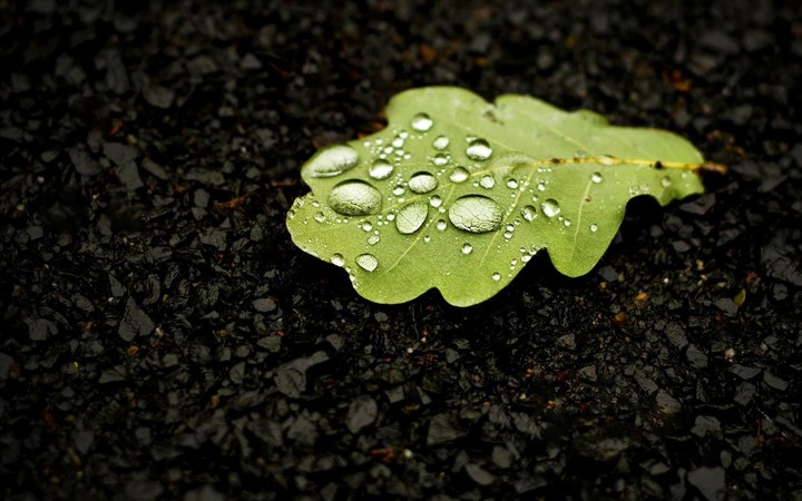 Beautiful Landscape With Leaf And Water Drops