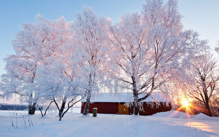 Beautiful Winter Landscape With Snowy Trees And House Under Sunlight