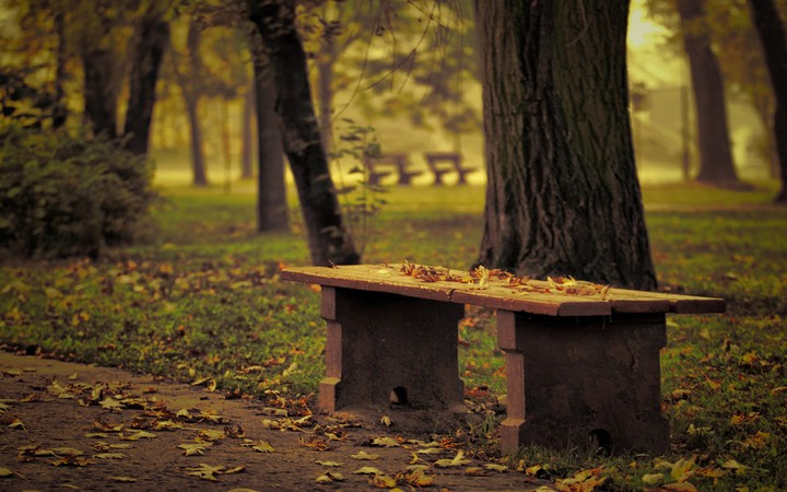 A row of benches in a beautiful autumn park