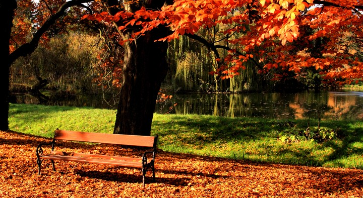 Beautiful autumn view of a bench under a bright colored autumn tree