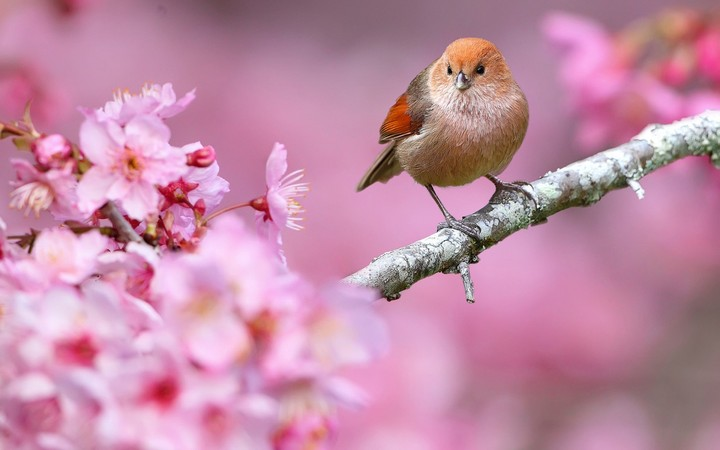 Bird And Spring Flower
