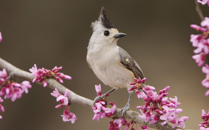 a bird and cherry blossoms