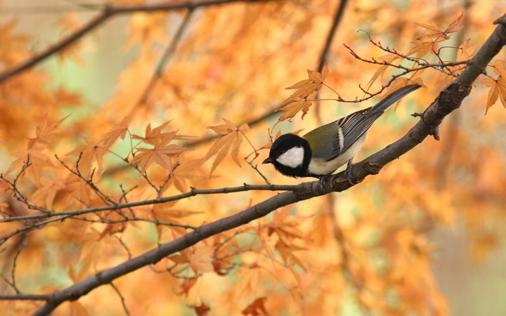 bird on autumn branch wallpaper by marksteele