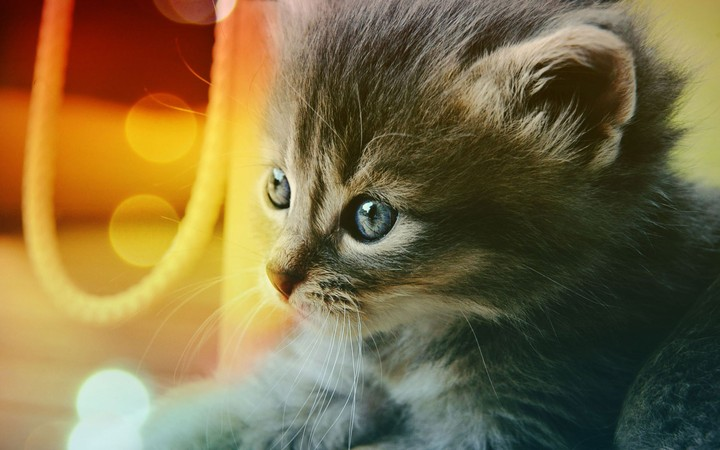 Kitten Cat background