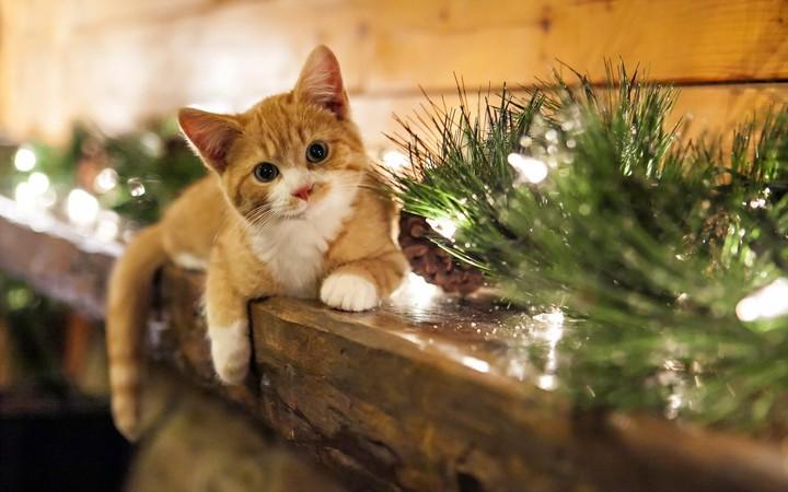 cat christmas lights new year