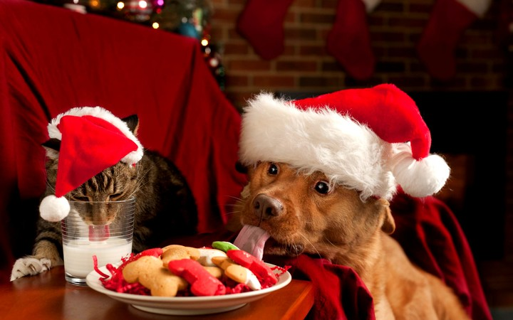 Cat and dog with Santa red hats Eating Christmas Cake