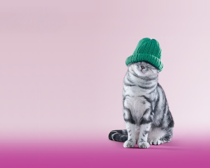 Cat wearing a blue knitting hat with close eyes on pink background