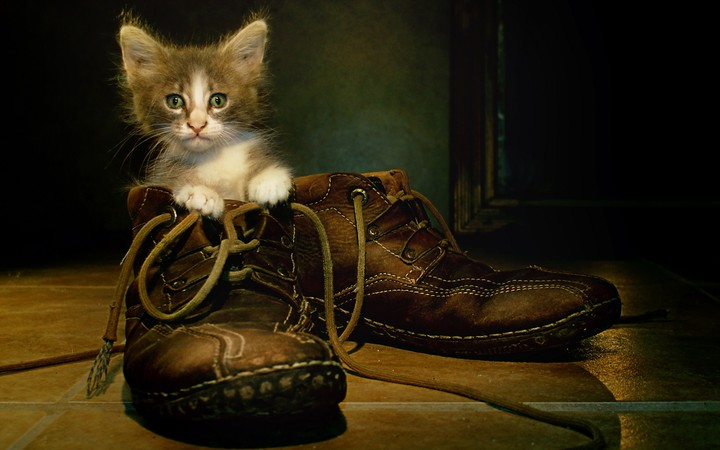Cat In Boots background for desktop, mobile, hd