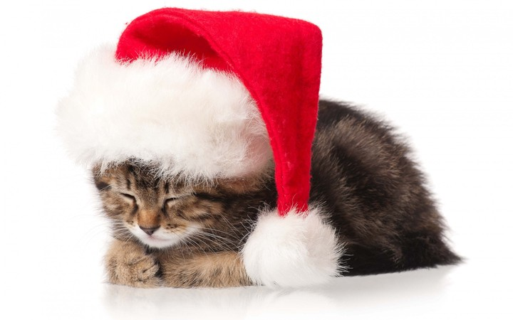 cat kitten christmas holidays new year