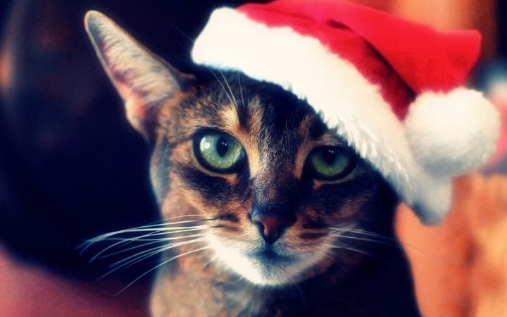 Cat, Christmas hat, new year