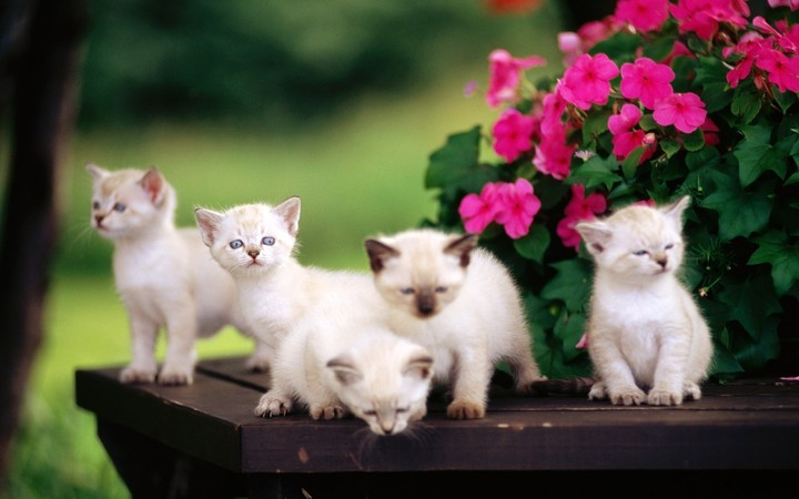 little kittens and pink flowers in vase on wooden table in yard
