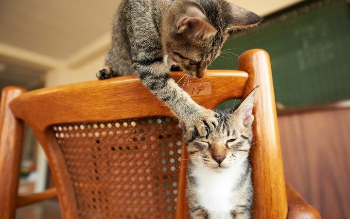 Cats, Couple, Playful