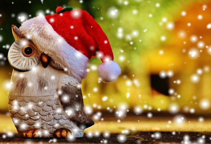 Christmas, Owl, Santa Hat, Snow