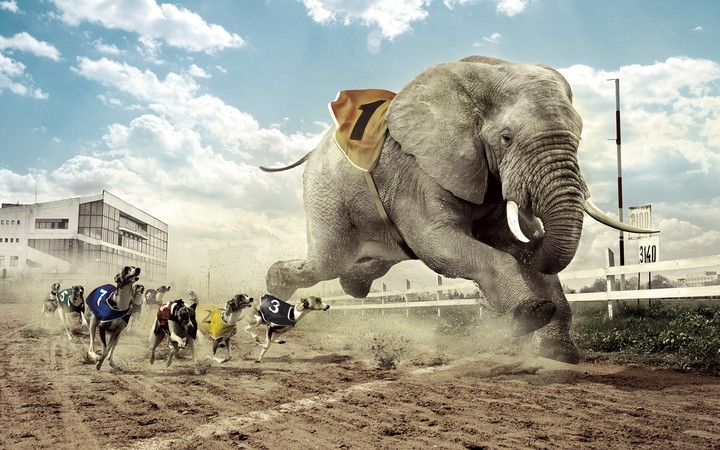 Creative Design Dog And Elephant Race