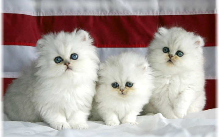 Three white kittens looking away