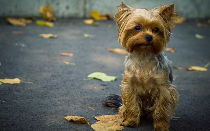 Cute baby Dog waiting something