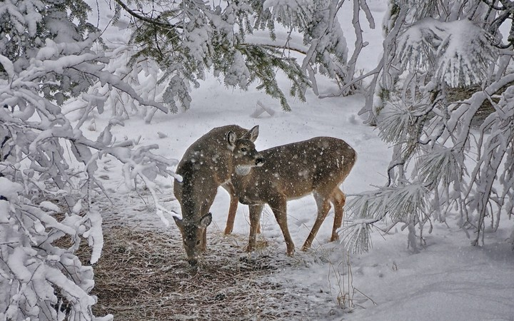 Deer in a forest caught in a snow storm