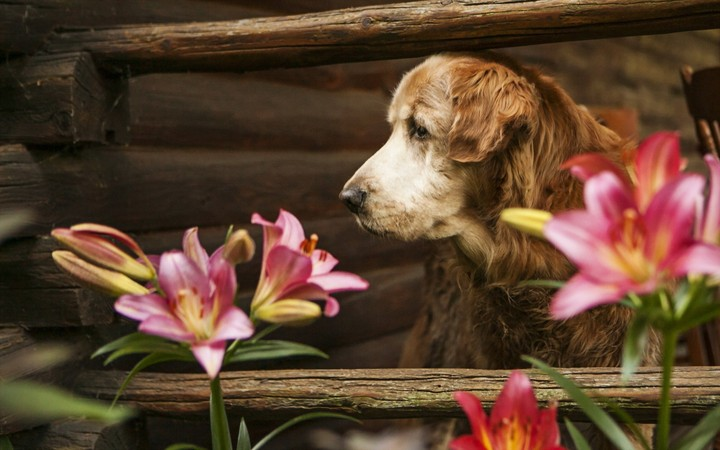 Dog And Lilies Flower