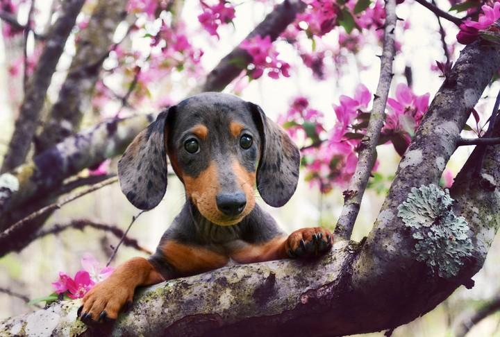 Dog In Spring Wallpaper By Lise Revelwallpapers Net