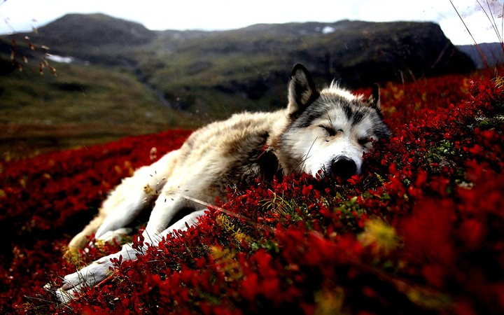 Dog and red flower