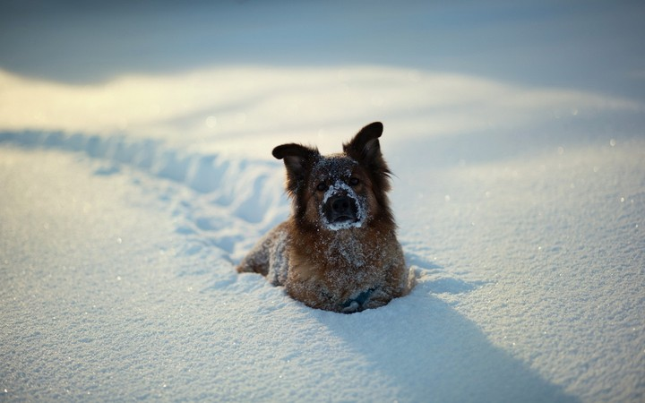 The Red Dog Sits In A Snowdrift Sunny Day
