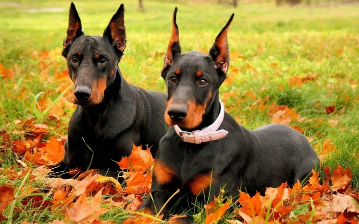 Dogs In Fall