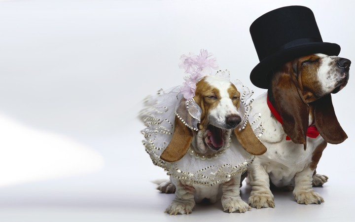 Dogs Wedding Funny Outfit