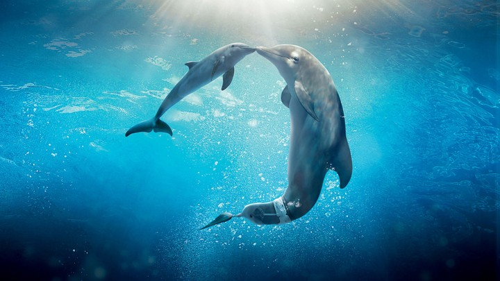 Dolphin Tale 2 Movie