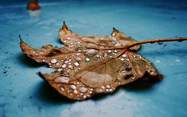 dry leaves on wet background with water drops showing autumn or rain concept