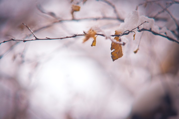winter season, dry leaves, snow