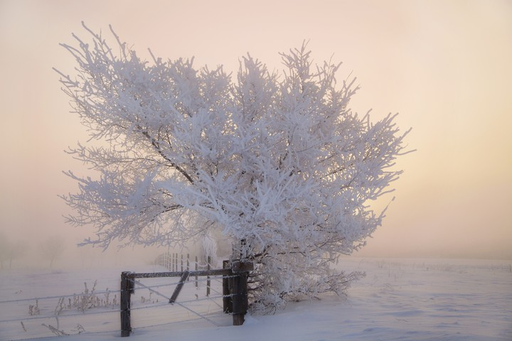 Winter landscape of frosty trees on foggy background ...