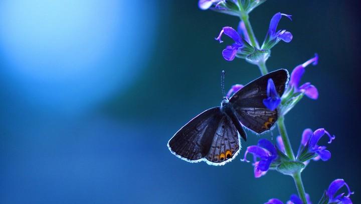 Flower Blue Butterfly Background Wallpaper By Marijane