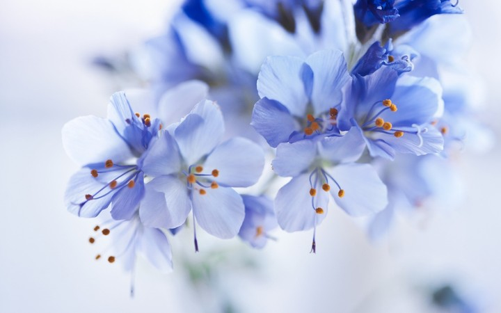 flowers-blue-close-up