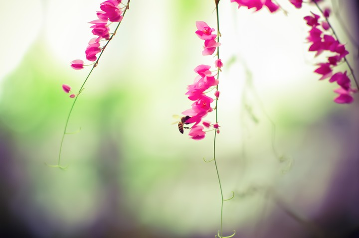 Flowers Pink Antennae The Bee An Insect
