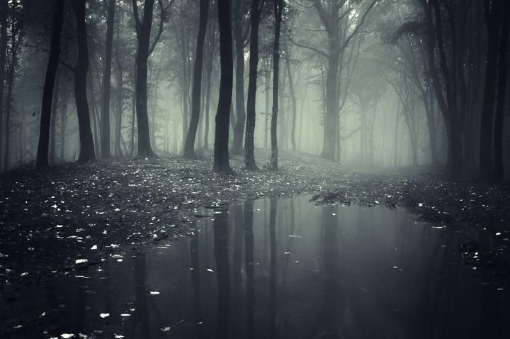 http://revelwallpapers.net/media/wallpapers/forest_deep_trees_creepy_nature_landscape.jpg
