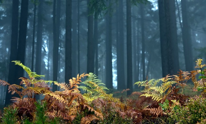 forest fern trees nature landscape