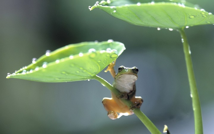 frog on leaf with water drops