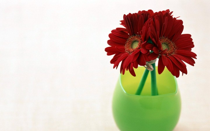 three Gerberas in a green Vase