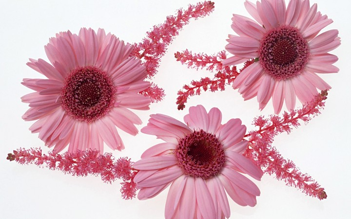 Gerbera Flowers Twigs Composition, pink flower for your background