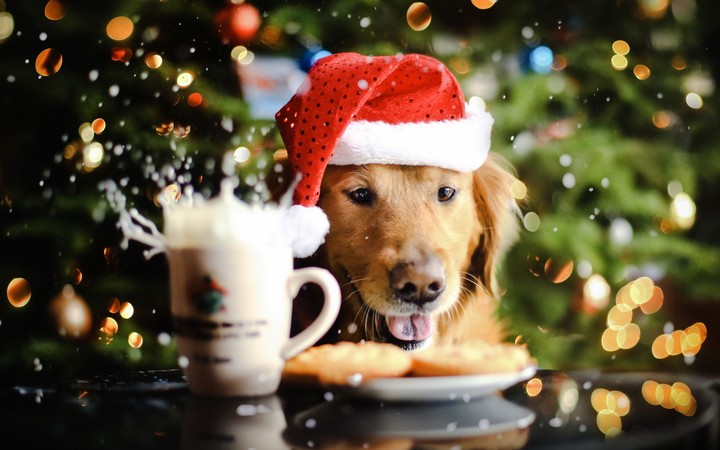 http://revelwallpapers.net/media/wallpapers/golden-retriever-and-christmas-cake.jpg
