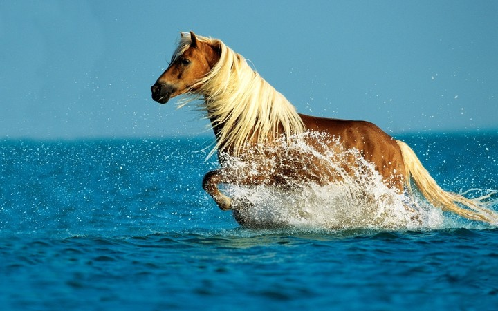 Horse Running through Water