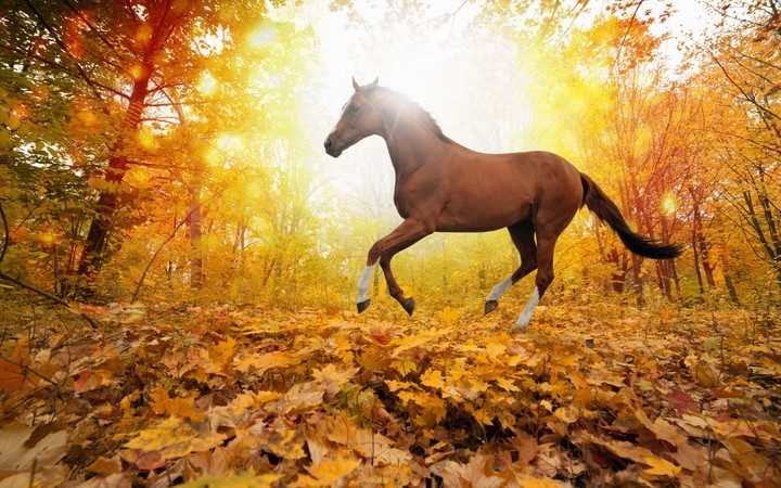 Horses In Fall Leaves Forest