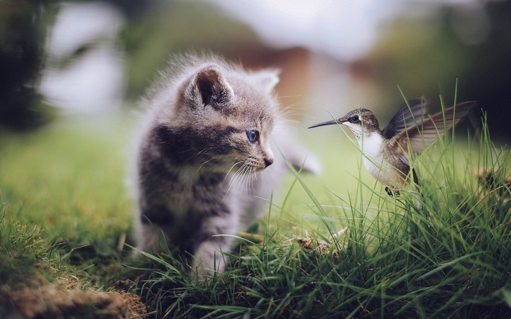 Kitten And Bird