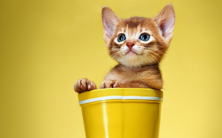 Cute Kitten In Yellow Cup On Yellow Background