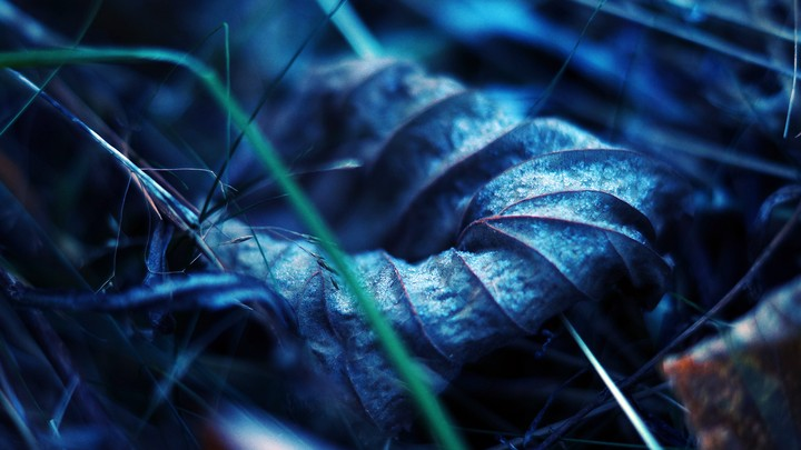 leaf dry autumn macro veins earth grass